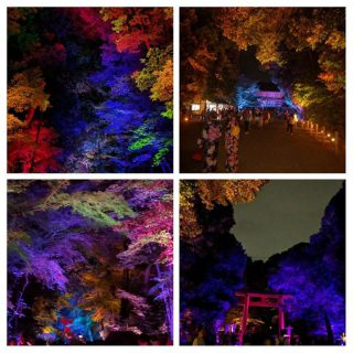 Last night the forest leading up to the Shimgamo Shrine was lit by thousands of lights creating magic! And it was free! Thank you Kyoto city…..
